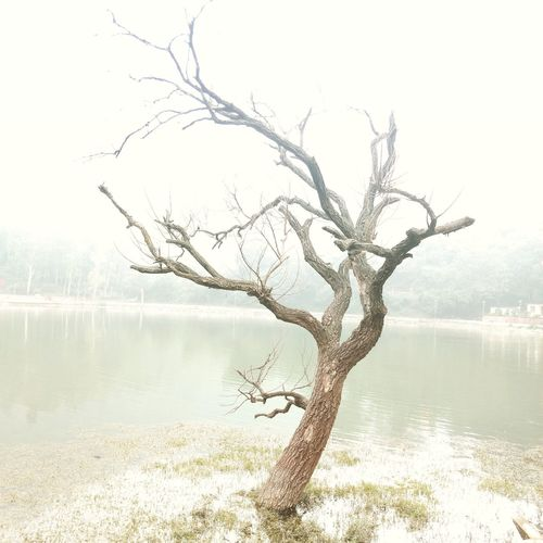 Renuka Lake Story Behind The Picture Story Photography Trees Are Beautiful TreesAndWater Tree Stump Tree Of Life Waterphoto Treetrunk Trees Waterphotography Forest Life Photographylovers Nature Outdoors Photograpy Naturelovers Beauty In Nature Nature Photography Photographer Photography Renukaji