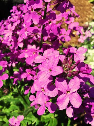 Spring 2016 Nature Photography Photooftheday Kızılağaç Spring Flower Collection Flowers