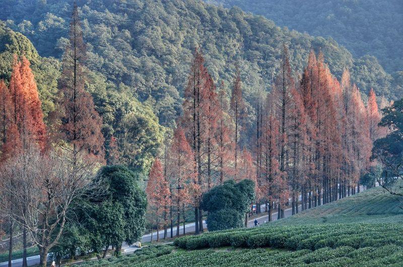 Panoramic shot of trees on mountain
