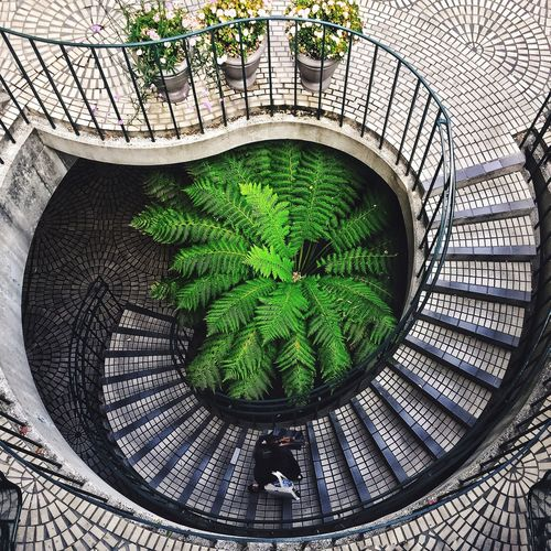 San Francisco Architecture Outdoors People Plant City Staircase