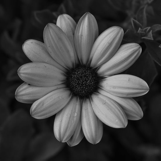 Flower Plant Nature Flower Head Beauty In Nature Fragility Close-up Outdoors No People Freshness Day Herb Growth EyeEm Selects Plant Part Freshness Beauty In Nature Botany White Color Black & White Photography