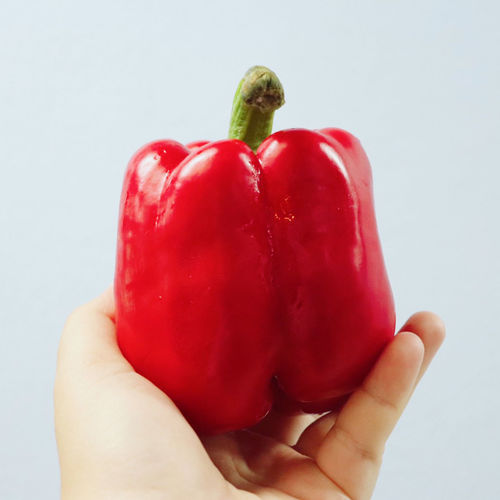 Close-up of hand holding red bell peppers against white background