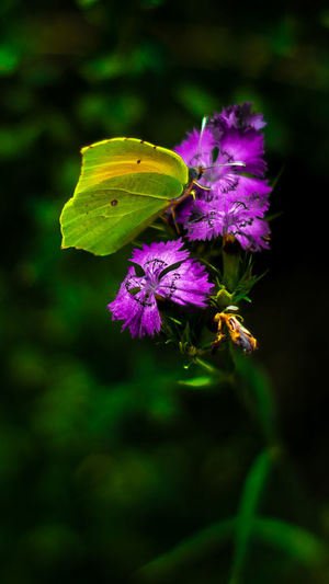 in the middle of the forest Flower Head Flower Leaf Insect Purple Multi Colored Close-up Animal Themes Plant Green Color Butterfly - Insect Pollination In Bloom Flowering Plant Petal