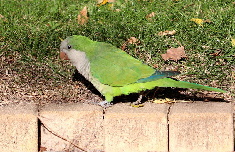 High angle view of bird perching on leaf