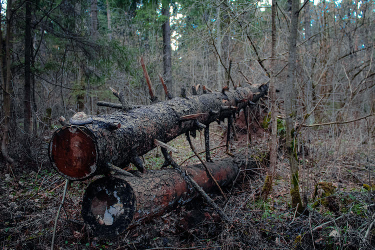 Damaged tree trunk in forest
