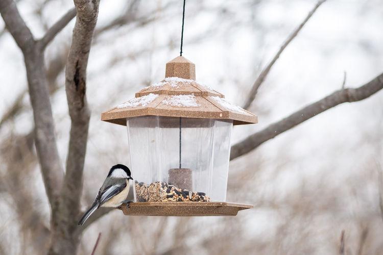 Tit on bird feeder