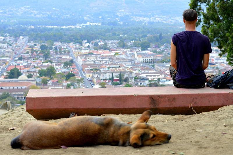 Dog Lying Against Man Sitting On Bench
