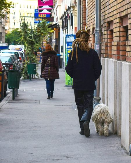 Architecture Built Structure Full Length Building Exterior Walking Transportation City Men City Life Outdoors Casual Clothing Day Casual Dog Rastaman Puli Looklike Similarity Streetphotography Street Budapest