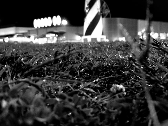Growth Nature Outdoors Freshness Close-up Rest Stop View Shadows & Lights Black & White