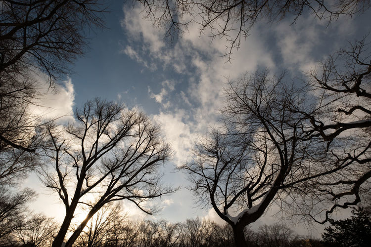 Tree Sky Bare Tree Cloud - Sky Branch Plant Nature Low Angle View Tranquility Beauty In Nature Silhouette No People Scenics - Nature Outdoors Tranquil Scene Day Dusk Non-urban Scene Idyllic Tree Canopy