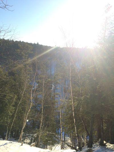 Michigan Trees Sun Winter Hiking