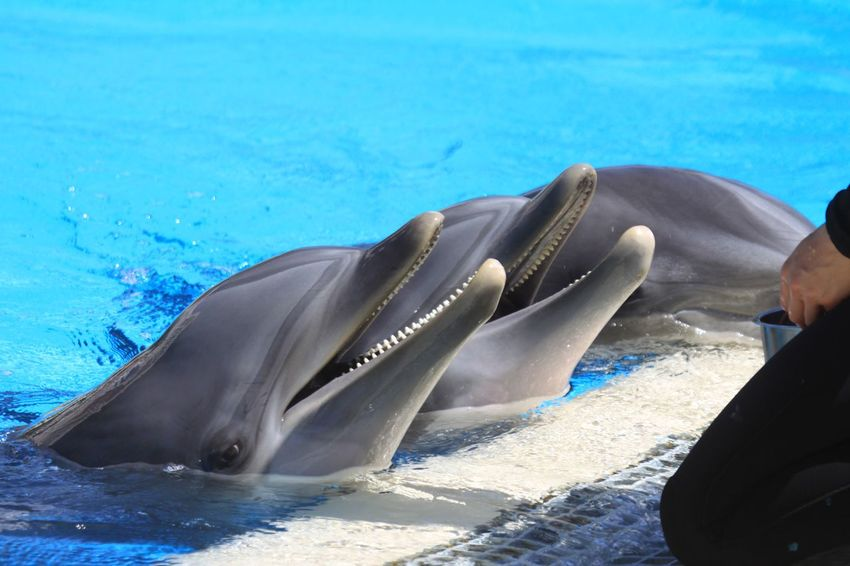 Animal Themes Animal Wildlife Animals In The Wild Aquatic Mammal Day Dolphin Dolphin Show  Mammal Nature No People One Animal Outdoors Sea Sea Life Swimming Water