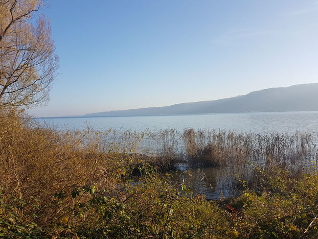 Horizon Over Water Landscape Beauty In Nature Sea Beach Water Nature No People Sky Clear Sky Outdoors Lake View Lake Of Constance