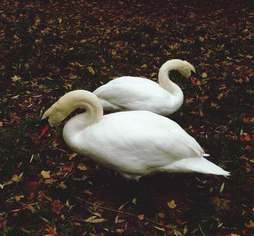 Leonie filter sur une photo de l'automne 2013