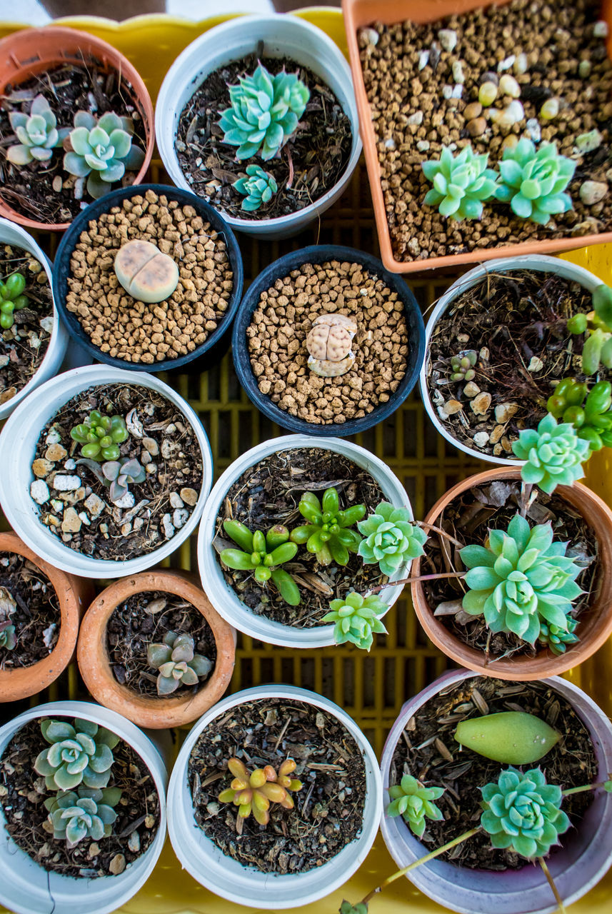 Full Frame Shot Of Potted Plants