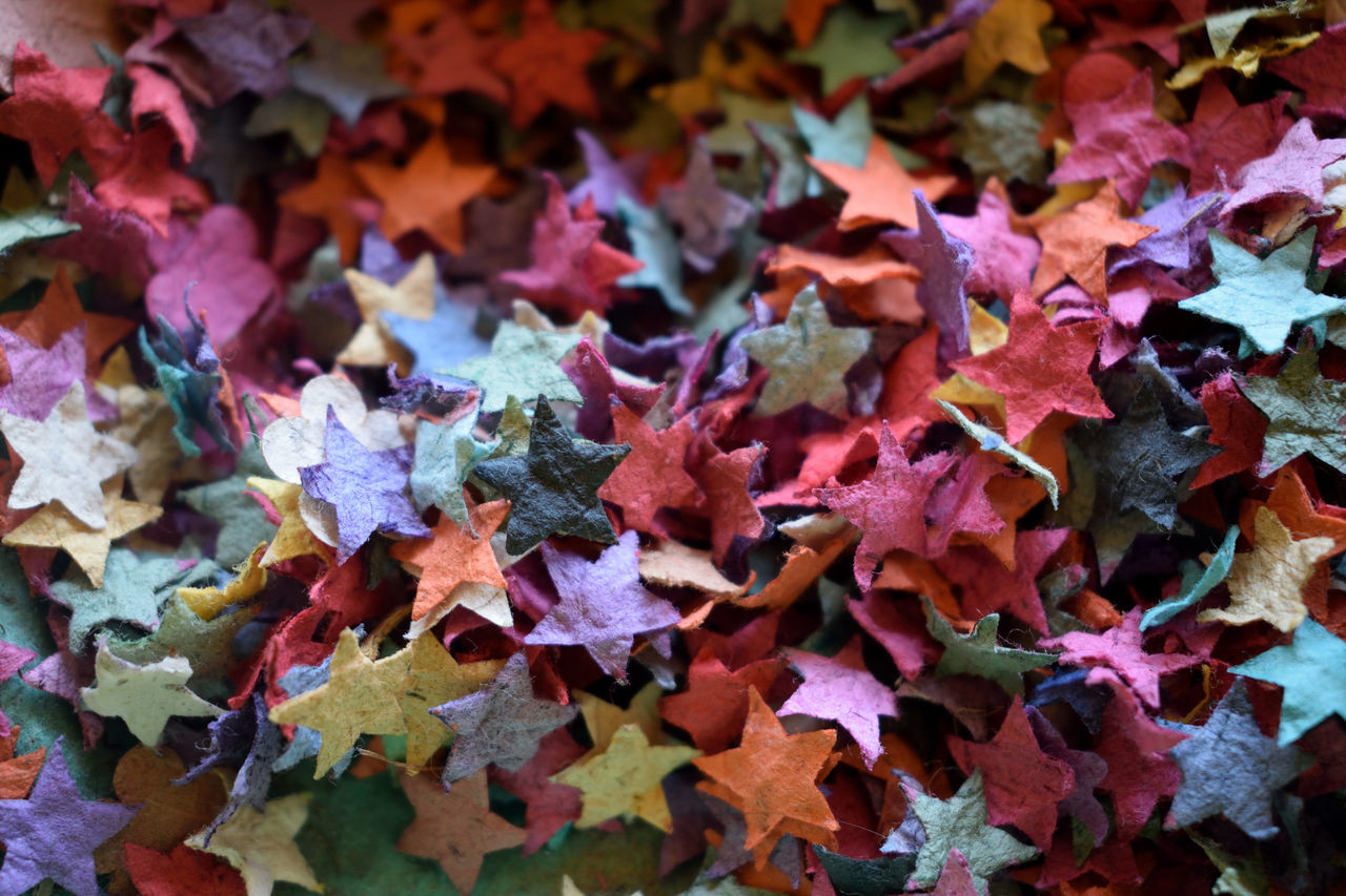 leaf, autumn, change, backgrounds, no people, multi colored, close-up, full frame, fragility, abundance, large group of objects, day, indoors, pencil shavings, nature