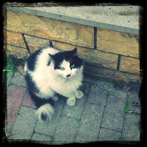 Cat♡ Beauty Eyes Naturallyblackandwhite MiracleofLife