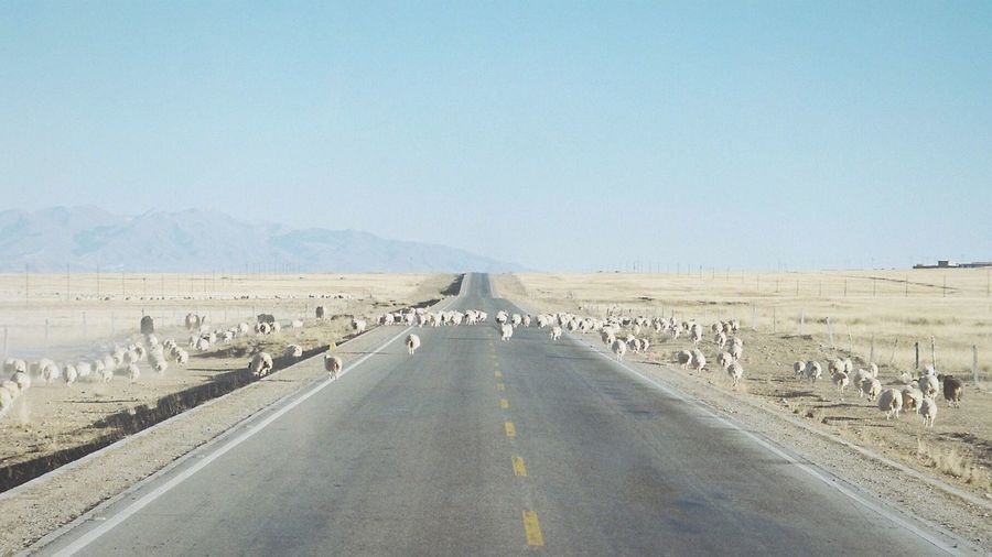 Somewhere on Silk Road Travelphotography Simplicity Travel Photography Filmisnotdead Traveling In China China Cattle Film Photography Life China Beauty Countryside Country Road Journey Film Silk Road Skyline