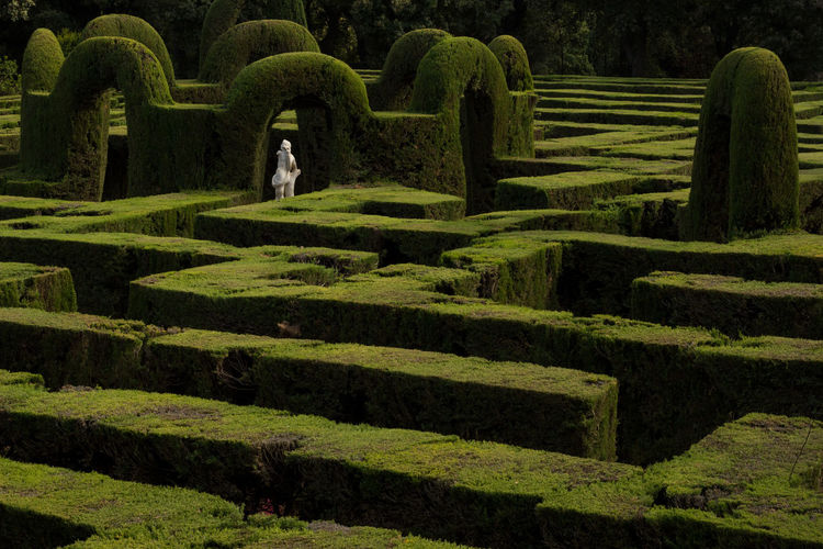 Maze At Park