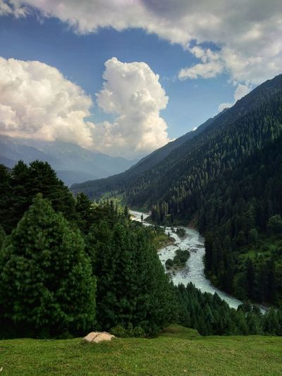 on the way towards aru valley Kashmir Kashmirdiaries Hikingadventures Mountains Clear Sky EyeEm Selects Tree Mountain Forest Water Tree Area Pine Tree Pinaceae Summer Sky Landscape Lush - Description Mountain Range Mountain Road Mountain Peak Coniferous Tree Pine Woodland EyeEmNewHere