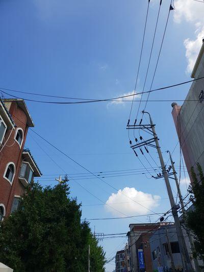 Telephone Line Tree Electricity Pylon Cable Electricity  Power Line  Power Cable Wire