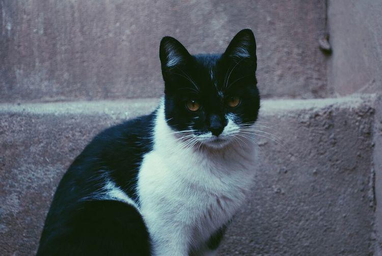 Cat Love P&B Pretoebranco