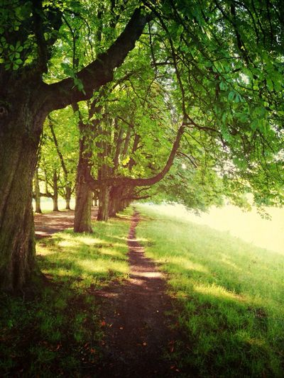 Footpath leading towards trees