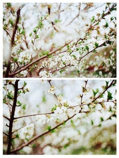Flower Flowers Nature Sumptuous