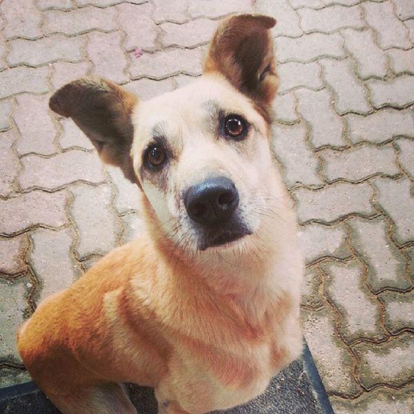 Maaaaa.... Due Coccole me le fai? Frida the sweetest Dog