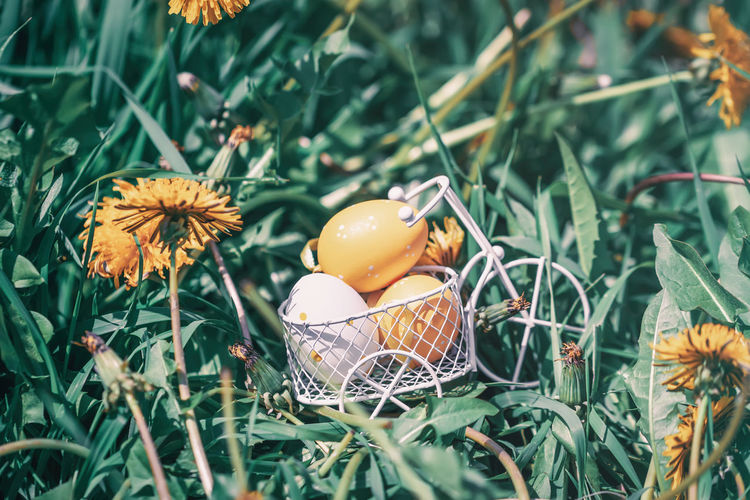 Coloful decorative Easter eggs in a miniature bicycle basket, cart, yellow dandelions blooming meadow in spring Plant Flowering Plant Nature Day Growth Green Color Flower No People Close-up Freshness Fragility Egg Food Food And Drink Outdoors Easter Colorful Miniature Bicycle Basket Cart Yellow Dandelion Meadow