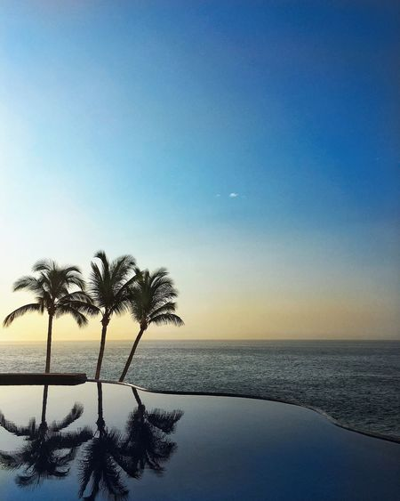 Sea Palm Tree Beauty In Nature Tranquil Scene Horizon Over Water Scenics Tranquility Water Nature Idyllic Beach Clear Sky No People Sky Sunset Tree Blue Outdoors Day