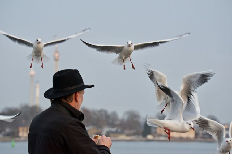 Man feeding seagulls flying against clear sky