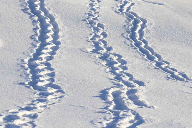 High angle view of footprints on snow covered land