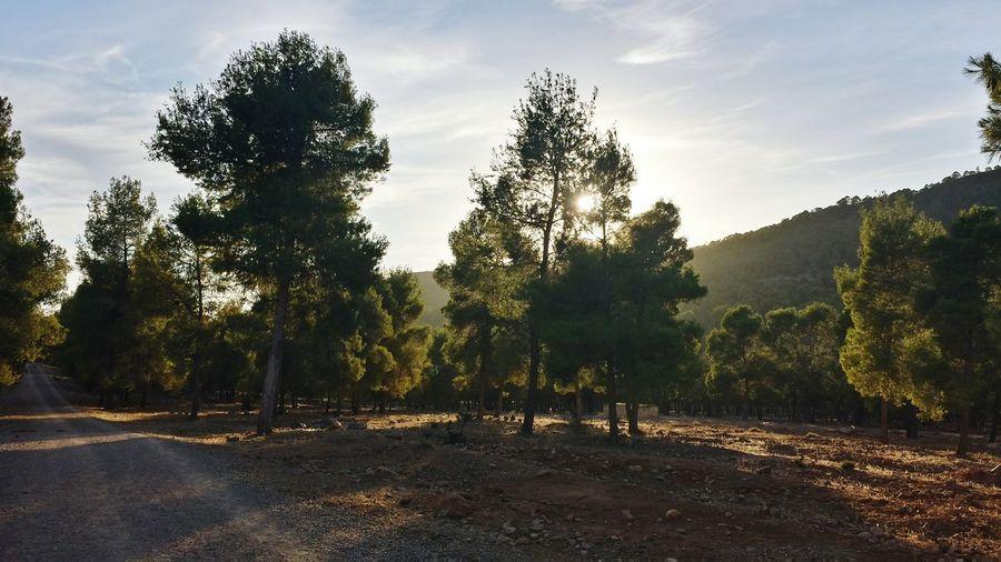 Trees Nature Sidi M3afa Oujda Oujda City, Morocco الحمد_لله سبحانك ربي Forest A Walk In The Woods