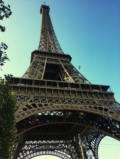 Bird Eiffel
