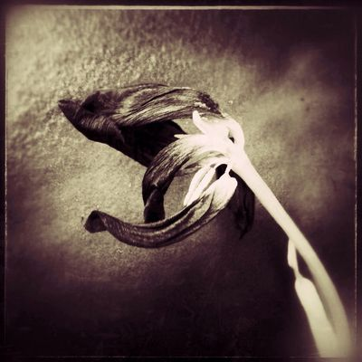 """""""Death Throes"""". NEM Black&white NEM Painterly IPhoneArtism Beauty Of Decay Using Snapseed, Laminar pro."""
