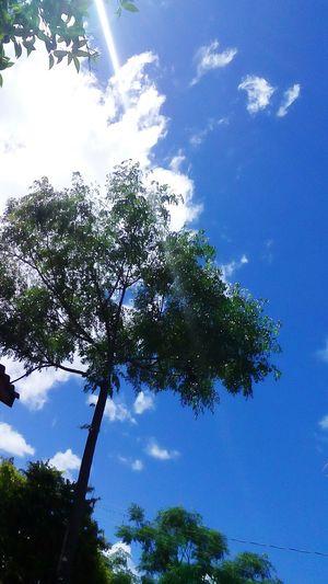 🍀 Tree 😚