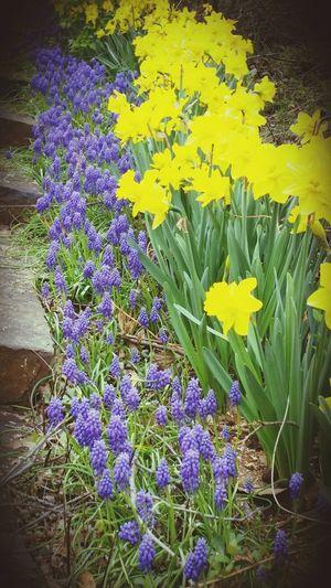 Springtime Flowers Tulsa, OK Philbrook Museum Oklahoma Beauty Nature First Eyeem Photo