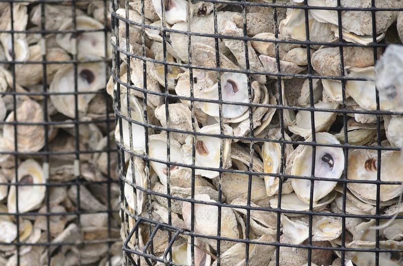 Close-up of oyster shells in metal basket