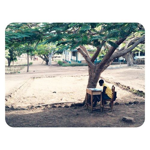"Under the Flamboyant. ?: Enoch ""Robot Boy"" Appiah Jr (©2014) Next week, examination starts. A student is seen revising under a tree?, the classrooms are not conducive for studies, she says. I agree with her, the harmattan has started here in the North. AndroidPhotography Student Harmattan Knowledge learn Tamale tamaleInsta Ghana Ghana360 afterlight noFilter"