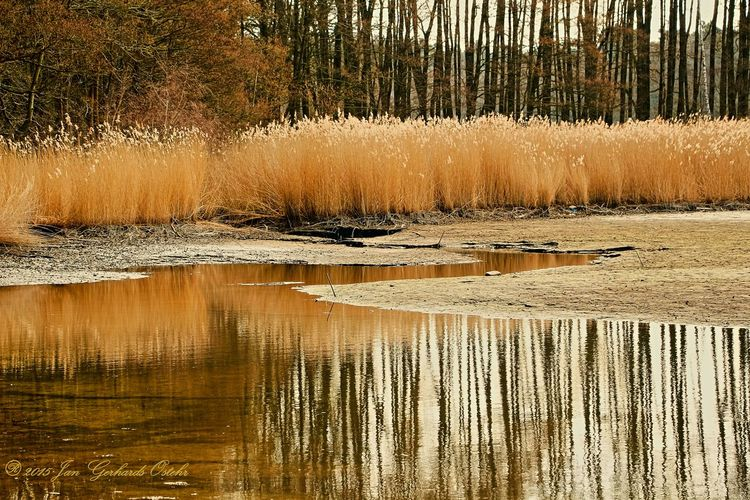 Spring Reflections Nature Nature On Your Doorstep Nature_collection Nature Photography Nature_perfection Taking Photos Water Reflections Landscape_Collection Landscape Naturelovers Landscapes With WhiteWall 43 Golden Moments