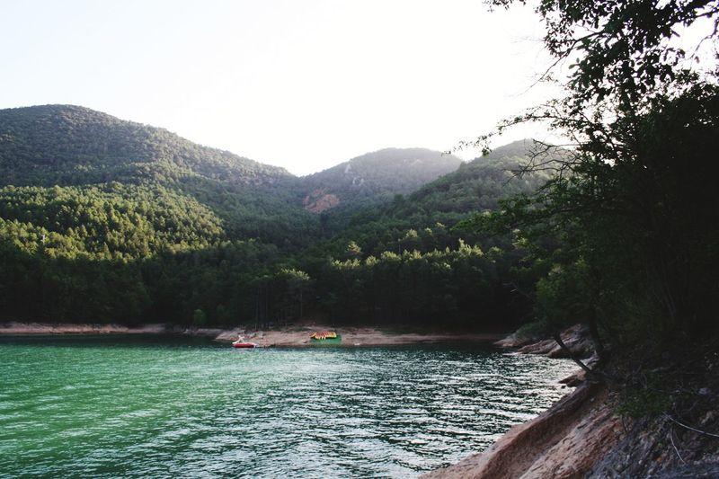 Green lake Tree