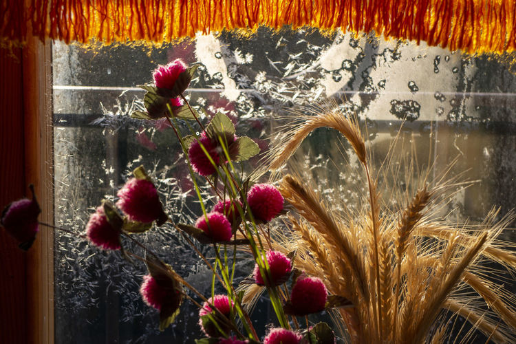 Close-up of flowering plants in glass window