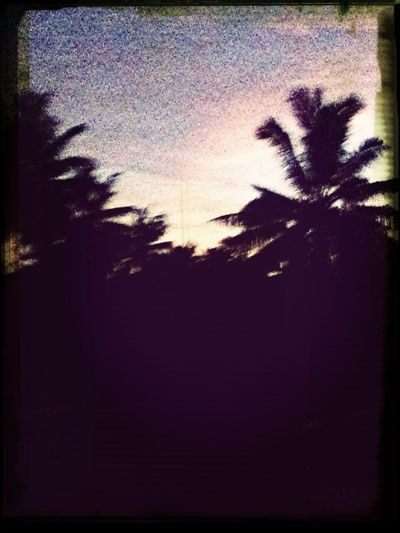 Samoa's NIGHT