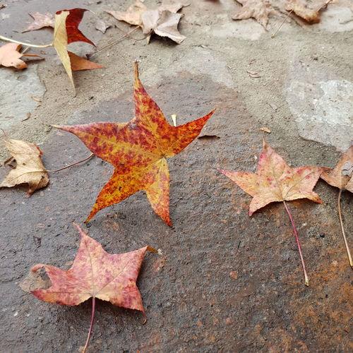 leaves Otoño