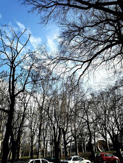 Blue sky 🌤