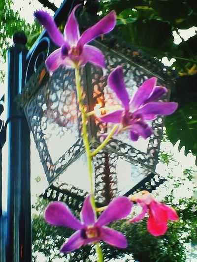 Streetlamp Pink Flower Wrought Iron Design Busch Gardens Tampa, FL