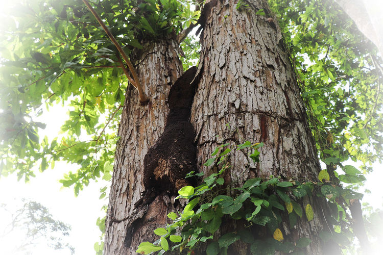 twins Tree Tree