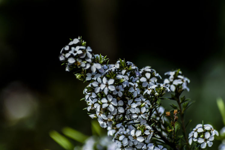 Close-up of white flowering plant