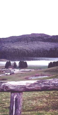 Nella piana del Cansiglio, le nuvole si formano tra i pini. Pine Forest Lake Cloud Autumn